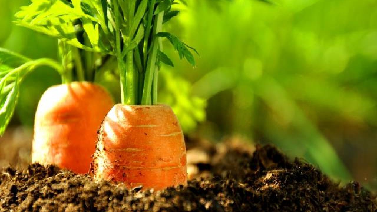 Jardin potager : que faut-il semer au mois de mars ?