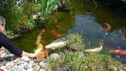 Comment construire un bassin dans son jardin mon for Bassin de jardin pour poisson