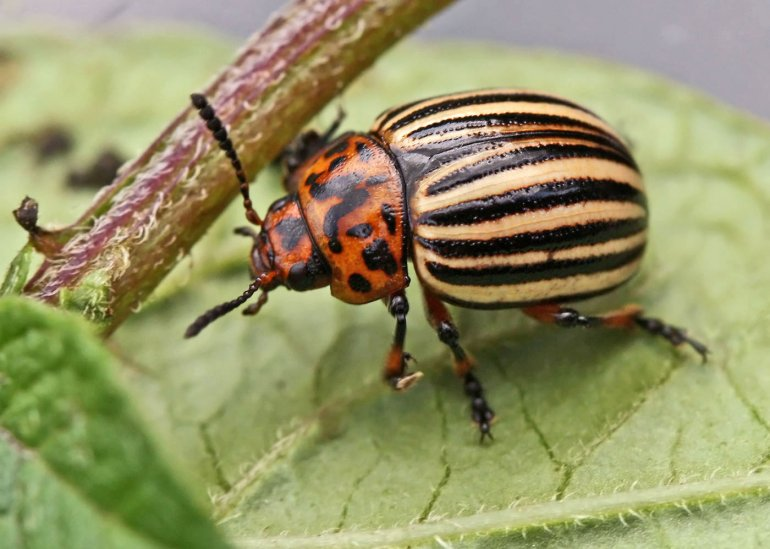 Comment lutter contre les insectes nuisibles du jardin potager ?