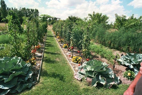Comment bien aménager son jardin potager ? – Mon potager gourmand