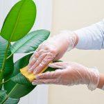 potager-soin-des-plantes