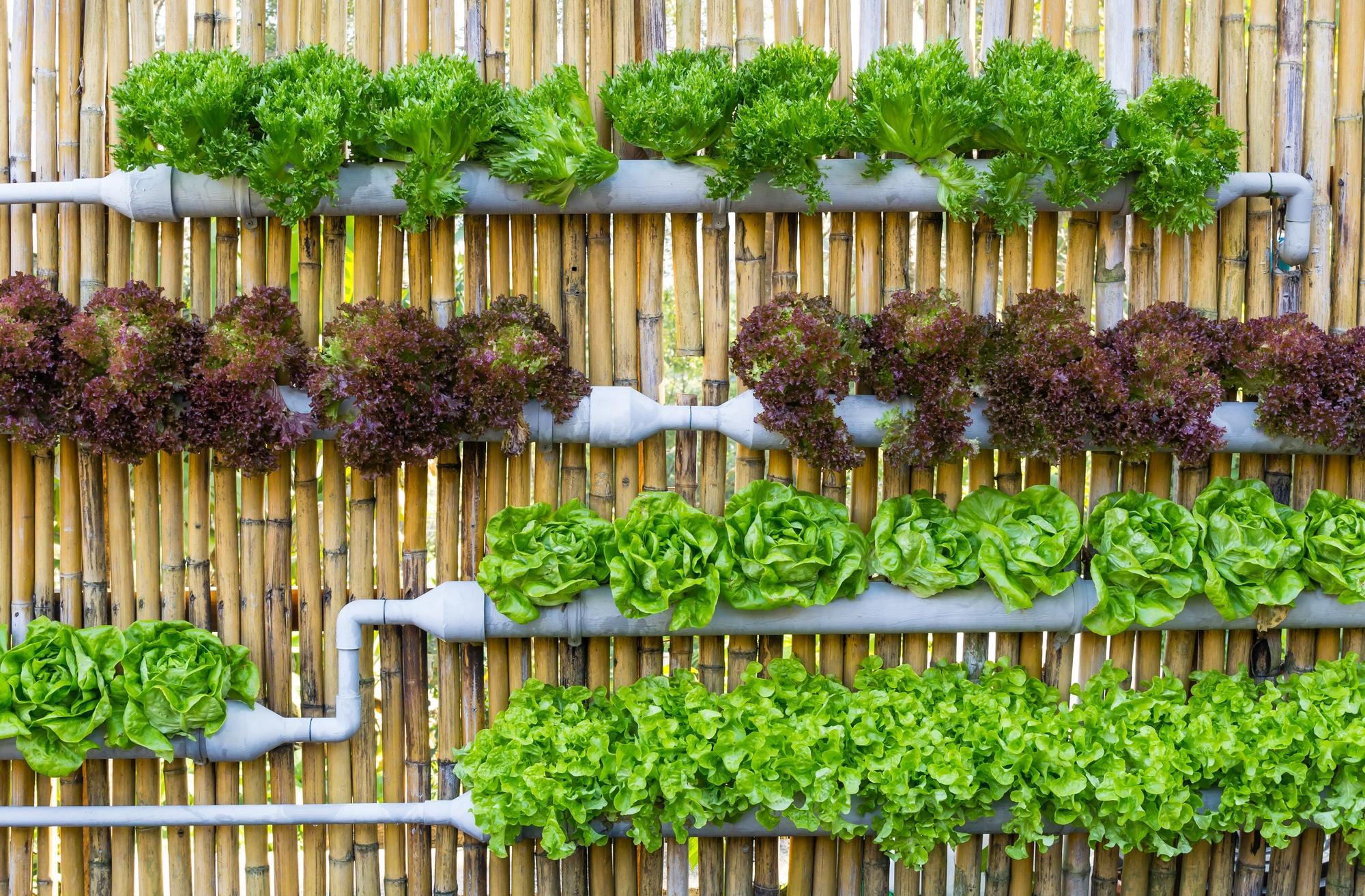 La plantation hors sol, idéale pour la culture indoor