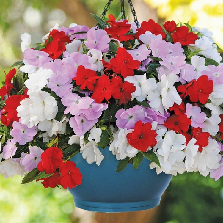 plantes dans un pot