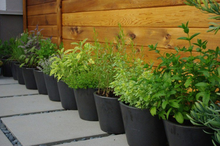 Les herbes aromatiques s'invitent au potager