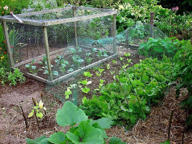 Mon potager gourmand conseils et astuces pour jardins - Tunnel de protection pour potager ...