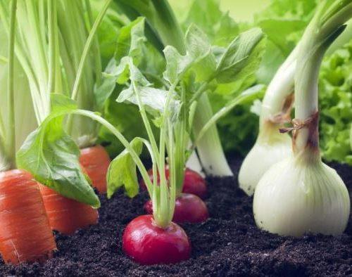 Créer votre premier potager : que planter ?